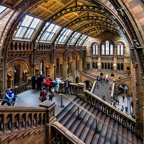 Day at the Museum by Jan Murphy - Buildings & Architecture Other Interior ( prehistoric, windows, museum, people, lights, history, railings, stairs, exhibits, london, starbursts, fossils, public, natural history museum,  )