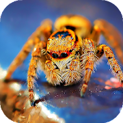 Spider Wallpapers: backgrounds hd