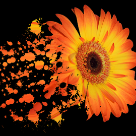 nice gazania by LADOCKi Elvira - Digital Art Things