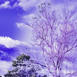 purpish by Empty Deebee - Nature Up Close Trees & Bushes ( tree, purple )