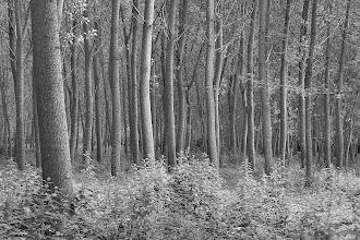 Photo: Forest - Dordogne valley