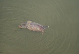 Photo: Turtoise in the middle of Washington.
