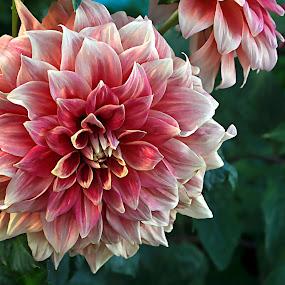 Romantic  by Yasir Saeed - Flowers Single Flower