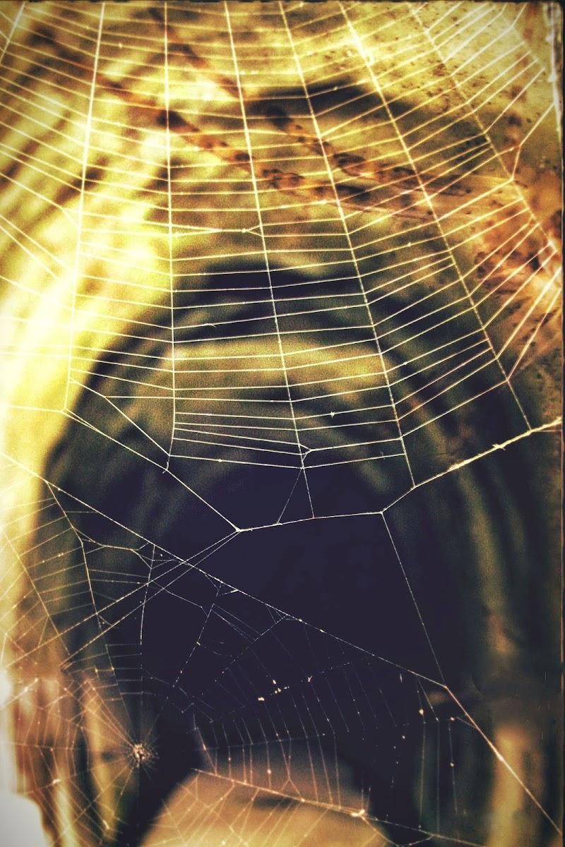 L'antro dell'aracnide di Francesco Abate