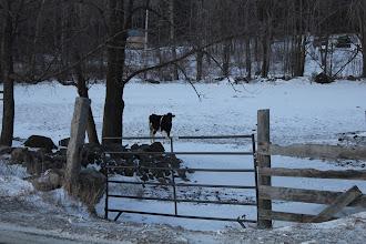 """Photo: """"I See You"""" Farm in Limington, Maine"""