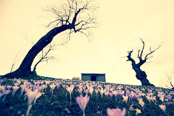 Prime fioriture di Ivan Bertusi