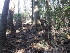 笹が生える斜面を登る