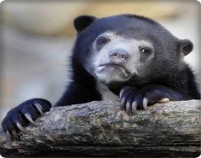 Cute Sad Face Animal Apps On Google Play