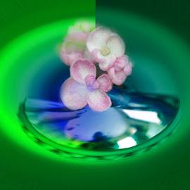 abstract flower by Paul Wante - Digital Art Abstract ( digital, art, green, abstract, photography )