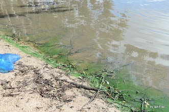 Photo: there was much less Algae around Saturday morning