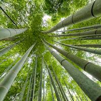 Bamboo Point di