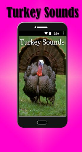 土耳其声音
