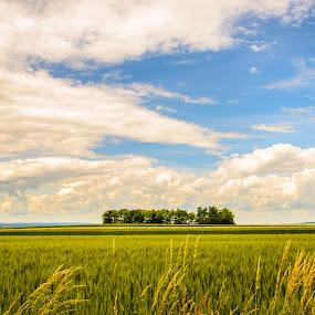 Weinviertel by Ernst Gamauf - Landscapes Prairies, Meadows & Fields ( clouds, weinviertel, nature, landscape, austria )