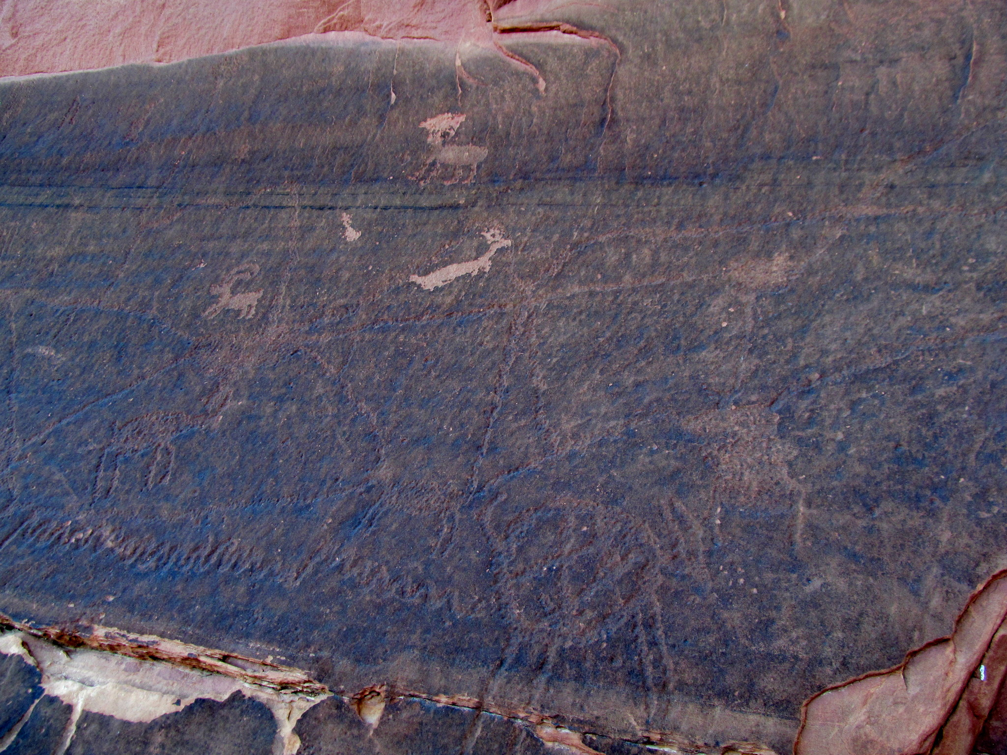 Photo: Lots of lines and newer sheep petroglyphs