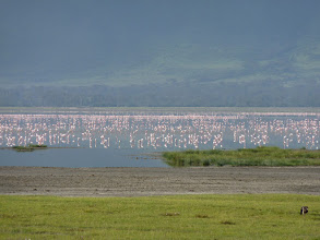 Photo: Flamingótenger