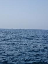 Photo: 船の近くでチョイチョイ出てます!