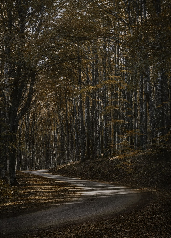 Autunno Toscano di #giannigalliphoto