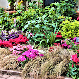 by Allen Wright - Flowers Flower Gardens
