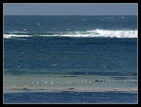 Photo: vol de tournepierres