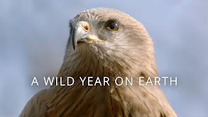 A Wild Year On Earth thumbnail