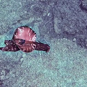 Sea Slug/Sea Hare
