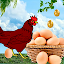 Egg Catcher surprise: free game 2019
