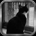 Bored Cat Live Wallpaper icon