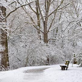 Snow White by Abhinav Ganorkar - City,  Street & Park  Neighborhoods ( park bench, snow, winter, snowing, park,  )