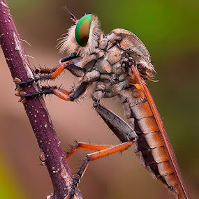 My Detail..... by Vincent Sinaga - Animals Insects & Spiders