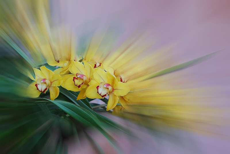 giallo sfumato di mauriziosettimi