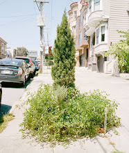 Photo: C116.RachaelJablo , 2014 New growth in the Western Addition (Dick/Bush) 11x 9 in. C-print Retail Price: $500 Reserve: $150 TO PURCHASE THIS WORK: call 415.863.7668 or email events@rootdivision.org