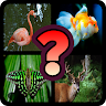 download Guess The Animal : Quiz Game apk