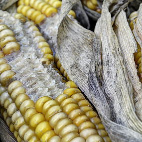 Corn Cob Textures by Steve Corcoran - Nature Up Close Gardens & Produce ( tone, texture, textures, vegetables, eden project, corn cobs, cornwall, corn, sweetcorn, corn on the cob, food, tones, harvest, vegetable, garden )