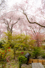 """Photo: This photo appeared in an article on my blog on May 7, 2013. この写真は5月7日ブログの記事に載りました。 """"Kyoto's Amazing Haradanien Garden, Part 4"""" http://regex.info/blog/2013-05-07/2256"""