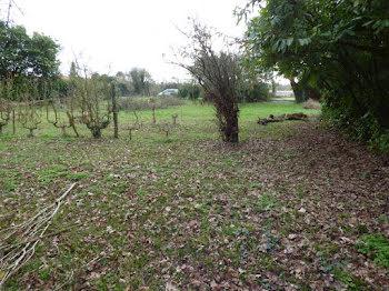 terrain à Sainte-Hermine (85)