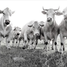 Take Our Picture Please  by Linda    L Tatler - Black & White Animals (  )