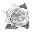 Flower Sketches Videos