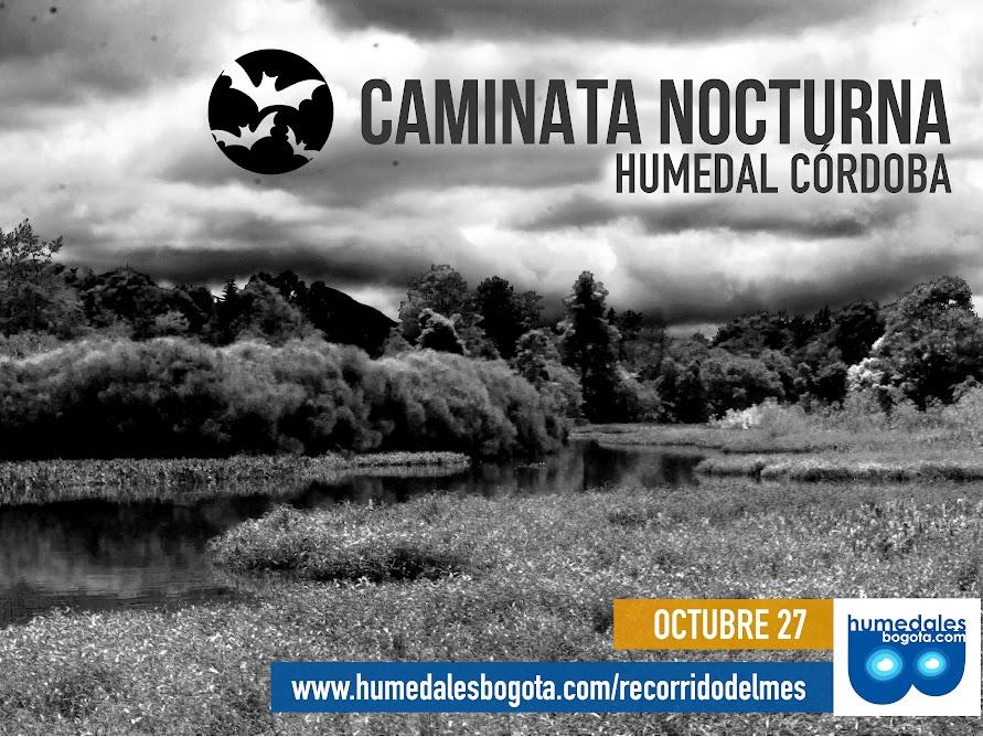Caminata nocturna humedal La Conejera