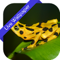 3D Frog Cube Live Wallpaper icon