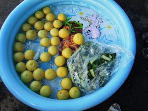 Photo: フルーツやキュウリは暑い時にも食べられる氷で冷やして提供。