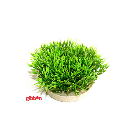 Green Moss Sydeco Plastväxt