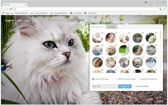 Persian Cats Wallpaper NewTab - freeaddon.com