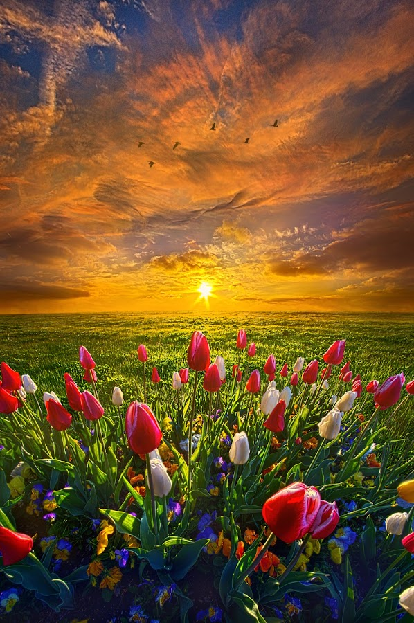 Drawing Near To Me by Phil Koch - Flowers Flower Gardens ( vertical, yellow, leaves, love, sky, tree, nature, autumn, perspective, flowers, light, orange, s  un, art, twilight, horizon, portrait, dawn, serene, trees, lines, natural light, wisconsin, ray, tulips, landscape, phil koch, spring, sun, photography, horizons, agri  culture, clouds, office, park, green, scenic, morning, shadows, field, spring colorful flowers, red, blue, sunset, amber, peace, meadow, summer, beam, sunrise, earth, garden,  )