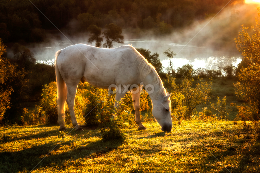 McCool in the Morning by Deanna Ramsay - Animals Horses ( dawn, horse, sunrise, pond, animal )