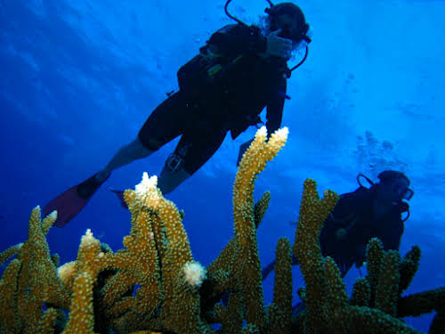 Patricia diving in the Ribbon Reefs, Great Barrier Reef