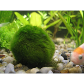 Cultivation of Aquarium Plants