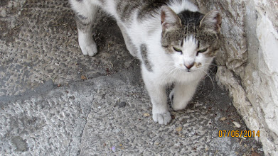 Photo: cats have free reign on the streets here...