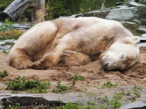Photo: Knut - so suess, wenn er schlaeft :-)