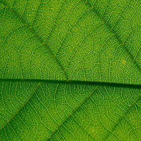 The secret of plants by Brijesh Meena - Nature Up Close Leaves & Grasses ( macro, macrophotography, macro photography, leaf, leaves )