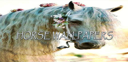 Decorate your screen with Horse Wallpapers.